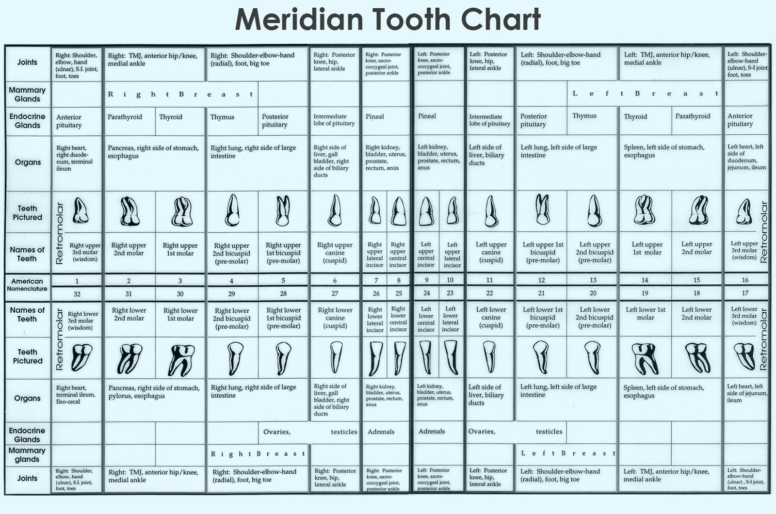 The Tooth-Body Chart; Clues to Nutritional Deficiencies